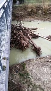 Montelabbate rimossi tronchi sotto il ponte