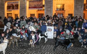 Pesaro,natale con i cani