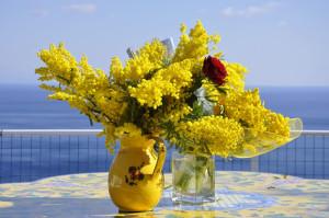 mimosa (foto mammeoggi.it)