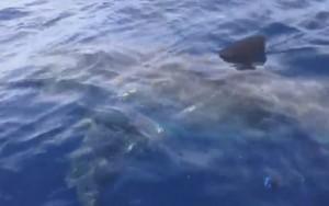 Lo squalo avvistato a Rimini