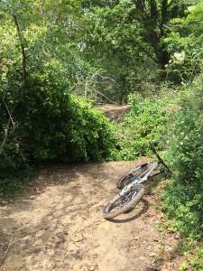 Il sentiero ostruito sul San Bartolo