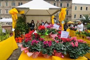E-Pesaro-festeggia-i-fiori