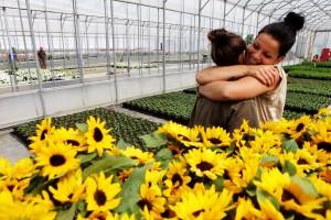 San Patrignano. Pasini. Coltivazioni. Serra di fiori girasole. Federica Alberti con ragazza comunità. Abbraccio.