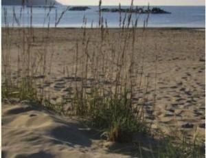 Spiaggia libera Baia Flaminia