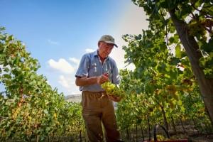 Le vigne de Il Conventino