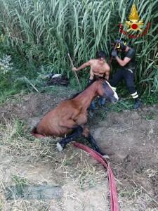 Il cavallo caduto nel tombino