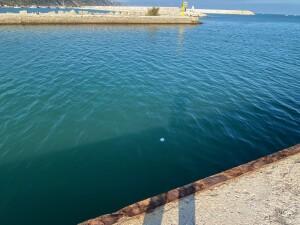 Il pallino bianco in basso è la palla di carta stagnola gettata in mare dalle due incivili
