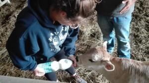 vitello latte
