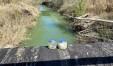 I vasetti con gli omogeneizzati abbandonati nel fine settimana sul ponticello sul fiume Foglia